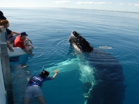 Put yourself in this picture - swim with the whales
